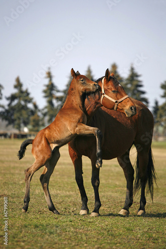 Foal jumping in sunny pasture land Wallpaper Mural