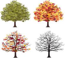 Different Seasons Of Art Tree. Vector