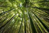 Długie bambusy w lesie