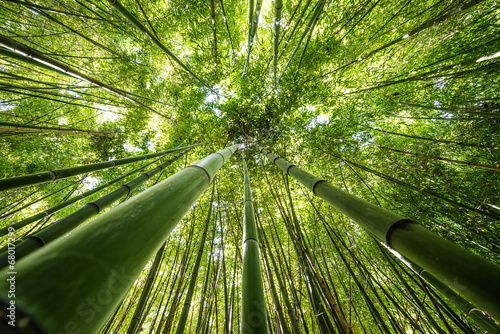 Tuinposter Bamboe bamboo forest - fresh bamboo background