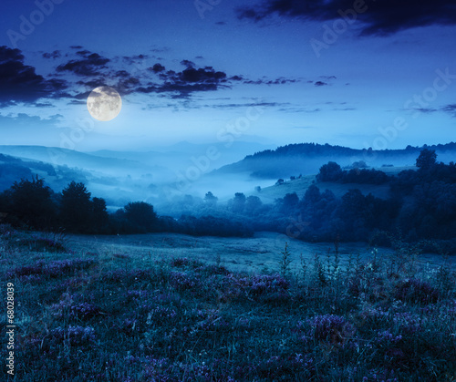 Aluminium Prints Blue cold fog in mountains on forest at night