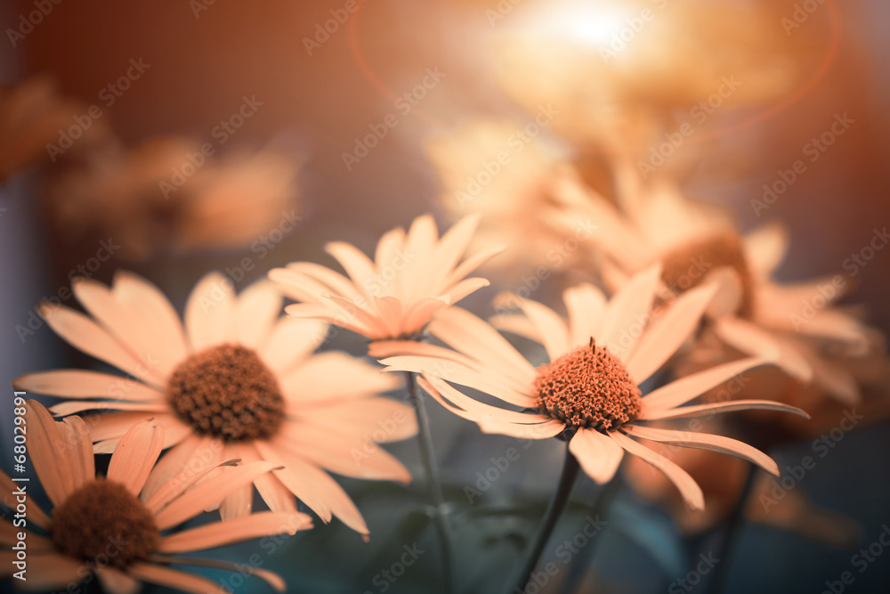 Fototapety, obrazy: yellow flowers at abstract background