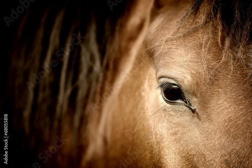 Eye horse Tablou Canvas