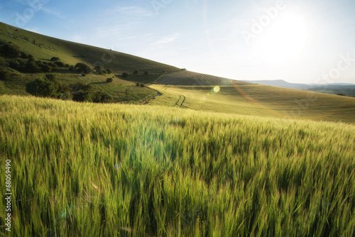 Foto op Plexiglas Cultuur Beautiful landscape wheat field in bright Summer sunlight evenin