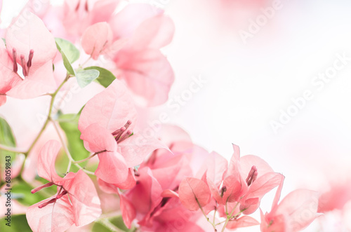 Papiers peints Azalea Paper flowers or Bougainvillea