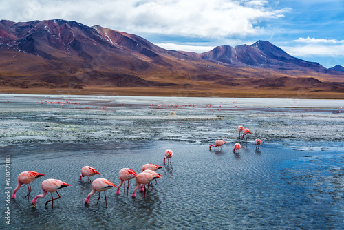 Garden Poster Flamingo Pink Flamingoes in Bolivia