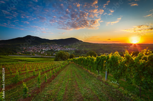 Poster Vineyard Vineyard with colorful sunrise in Pfalz, Germany
