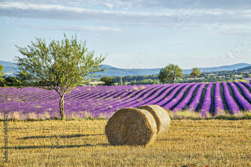 Foto auf Gartenposter Lavendel Lavander fields with hay rolls on the front view