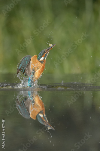 Photo Stands Bird Kingfisher with catch.