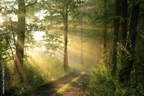 Poster Forets Dirt road through deciduous forest at dawn