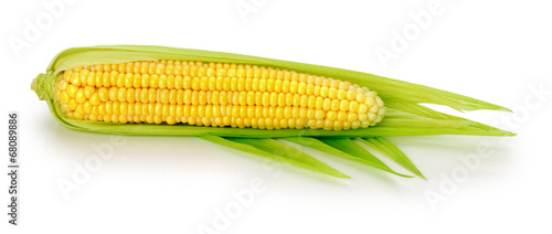Fotografía  An ear of corn isolated on the white background