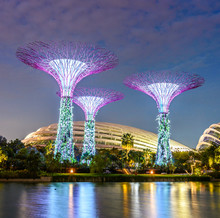 SINGAPORE - JUNE 26: Night View Of Supertree Grove At Gardens By