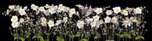 Night White  Flowers On Black