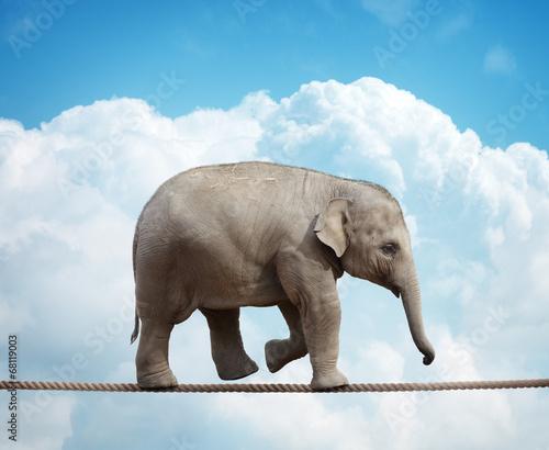 Foto op Aluminium Olifant Elephant calf on tightrope