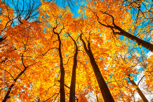 Aluminium Prints Autumn autunm trees