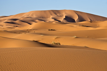 Panel SzklanyDune del deserto