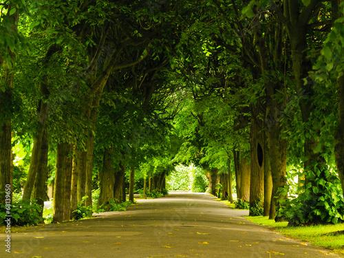 Fotografía  sidewalk walking pavement in park. nature landscape.