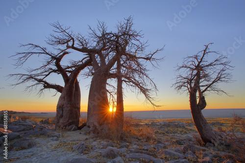 Poster Baobab Sunrise at the Baobab's