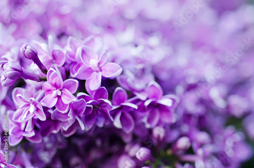 Foto op Canvas Lilac Lilac flowers background