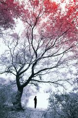 Fototapetaautumn trees