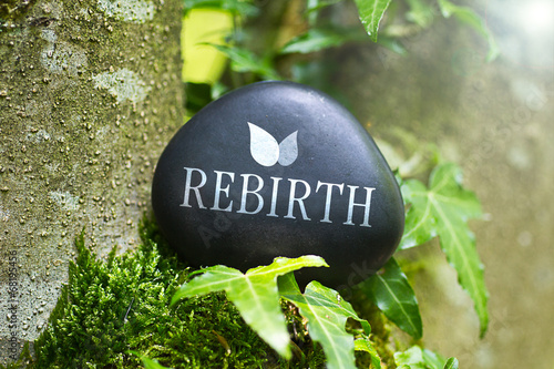 Rebirth Fototapeta