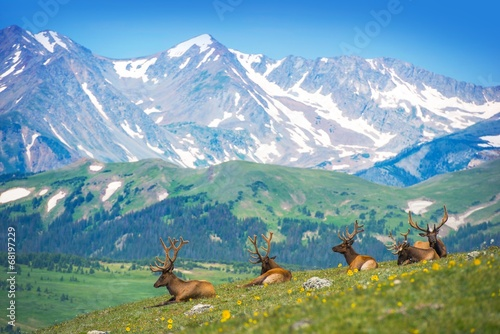 North American Elks Wallpaper Mural