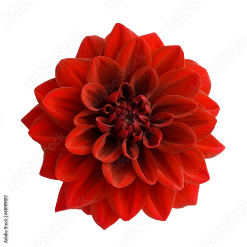 Poster de jardin Dahlia Red dahlia isolated on white background