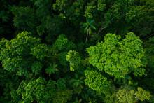 Rain Forest From Air Near Kura...