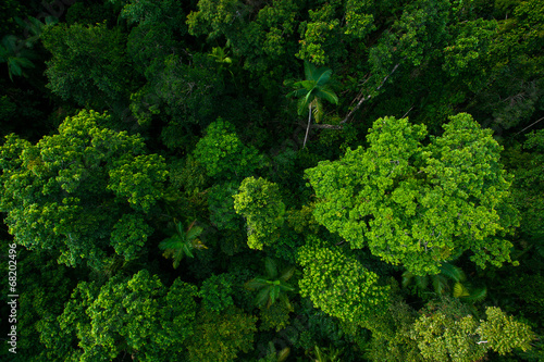 Foto op Canvas Australië Rain forest from air near Kuranda, Queensland, Australia