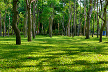 Beautiful Green Grassy Area With Shade Trees In A Park.
