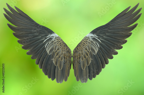 Poster Aigle wing isolated on green background