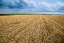 Wheat Stubble Field Over Stormy Cloudscape
