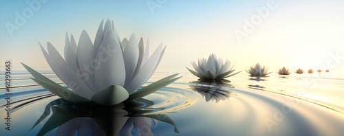 Photographie  Lotus im See