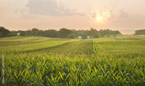 Midwestern cornfield below setting sun Canvas-taulu