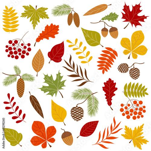 Autumn forest Wallpaper Mural