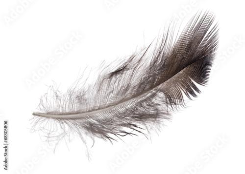 single feather dark grey color
