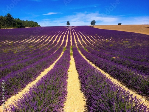 Papiers peints Aubergine lavender in south of France