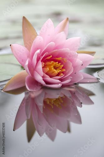 romantyczna-lilia-wodna