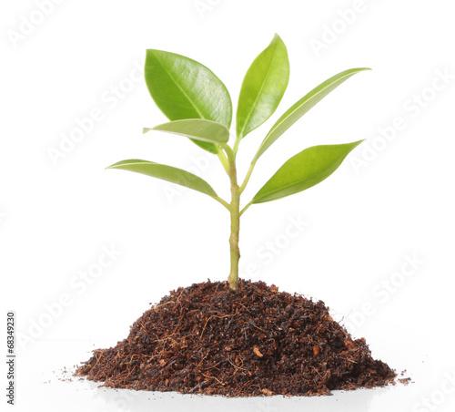 Fotografia  plant tree
