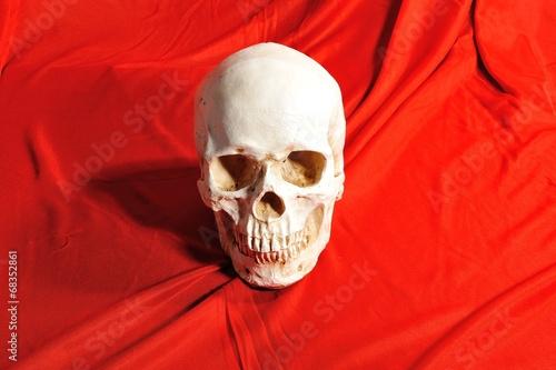 Fényképezés  赤い布と骸骨