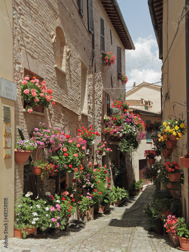 old paved street with incredible many flowers in village Spello