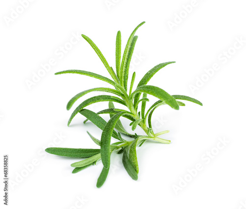 Leinwand Poster Sprig of fresh rosemary