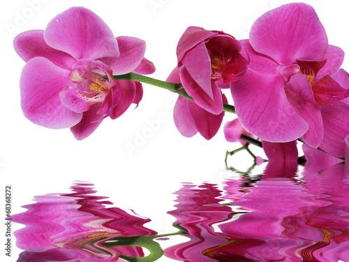 Papiers peints Orchidée reflet d'orchidée