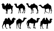 Camel Silhouettes