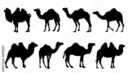 Canvas camel silhouettes