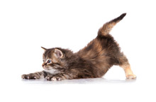 Adorable Little Tabby Kitten Waking Up