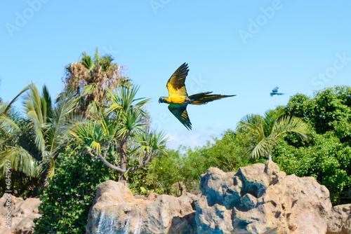 Fotografia  Parrots, Loro Park, Tenerife