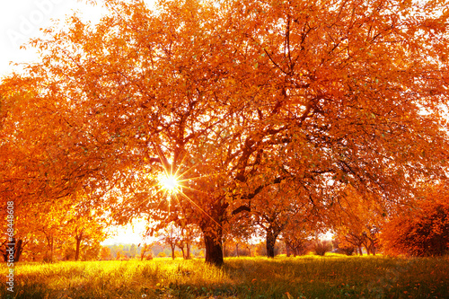 Beautiful autumn tree with fallen dry leaves - 68448608