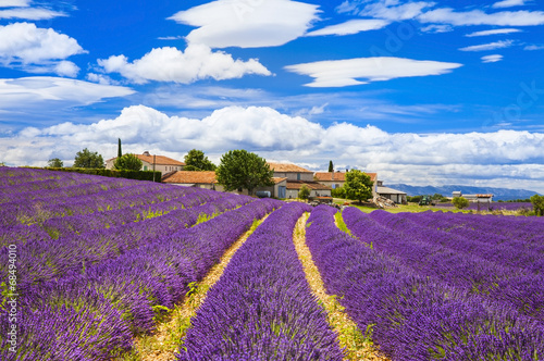 Crédence de cuisine en verre imprimé Prune Feelds of blooming lavander, Valensole, Provence, France, europe