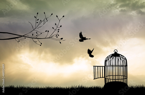 Fotografia  Cage for bird at sunset